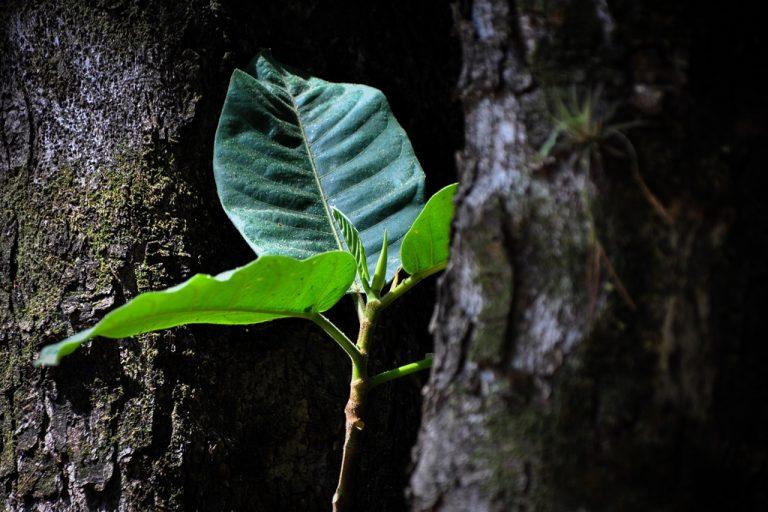 Fotos da exposição Projeto Unoeste Sustentável. Click: Taine Correa
